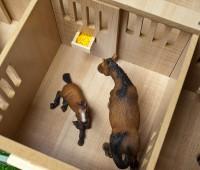 Paardenstal met 7 boxen 3