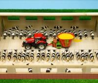 Loopstal voor koeien 1