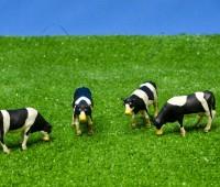 Set van 4 zwartbonte koeien  1
